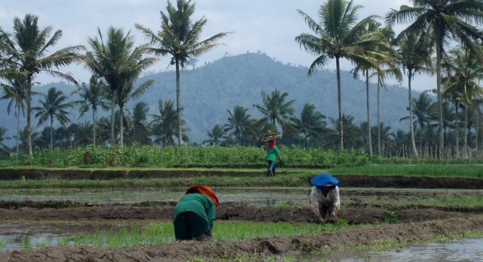 Desa Kalibaru