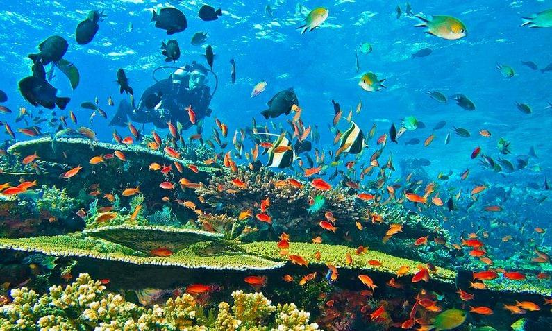 Snorkling Lombok Barat